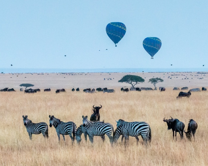 Kenya wildlife safari guide - The top 5 destinations to game drives | Focus